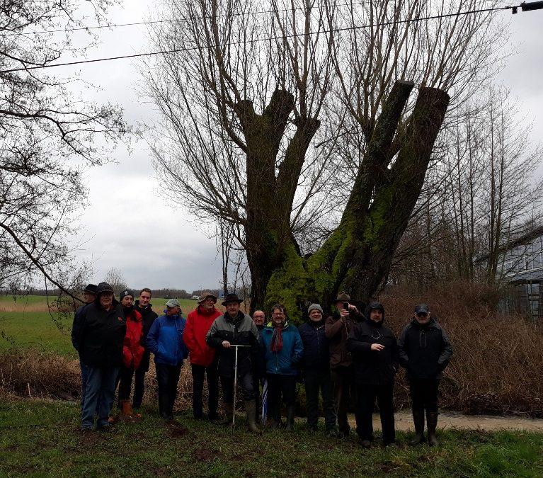 Assemblée Générale de l'Association Forestière des Vosges du Nordet découverte des saules têtards – 6 mars 2020