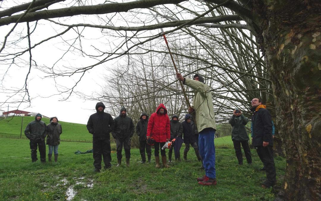 Journée technique sur l'arbre têtard organisée par EHLG – 3 mars 2020