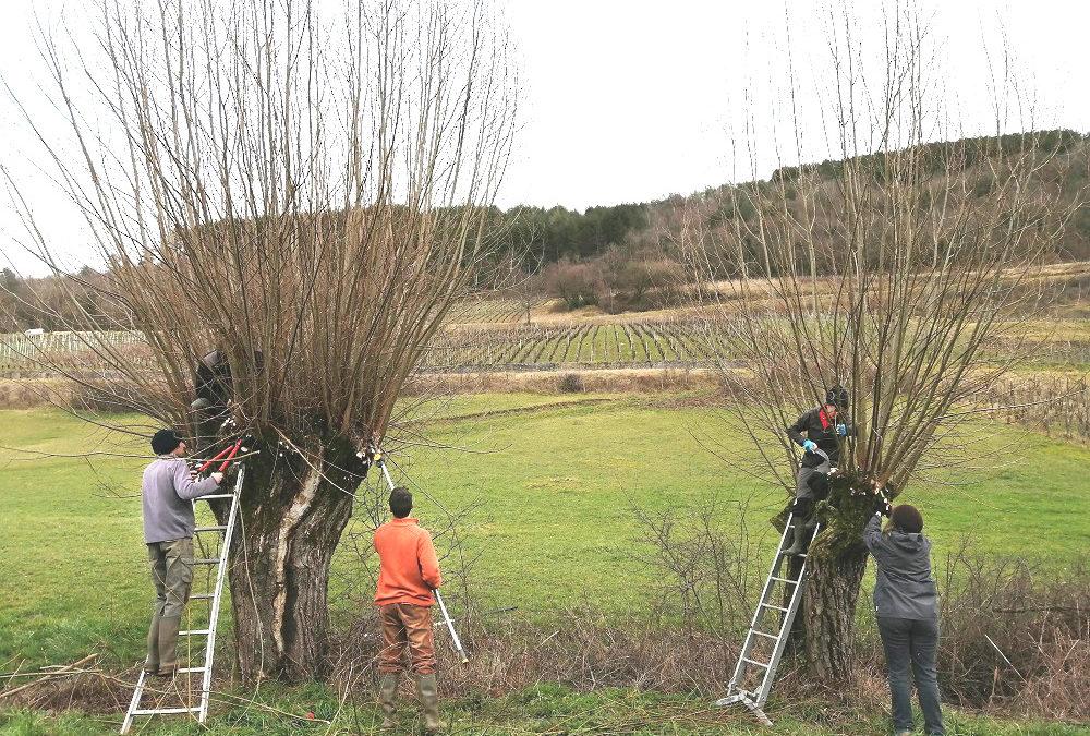 Découverte et chantiers trognes avec Jura Nature Environnement – 19 et 29 février 2020