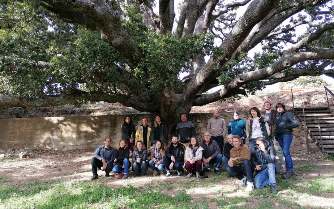 Formation agroforesterie et trognes le 12 mars 2020 à Olmi Capella (Corse)