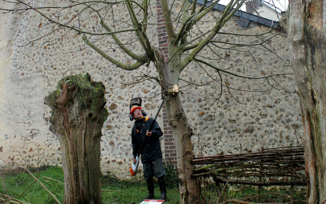 Formation plessage et trognes organisée par La Maison Botanique à Boursay – 7 et 8 février 2020