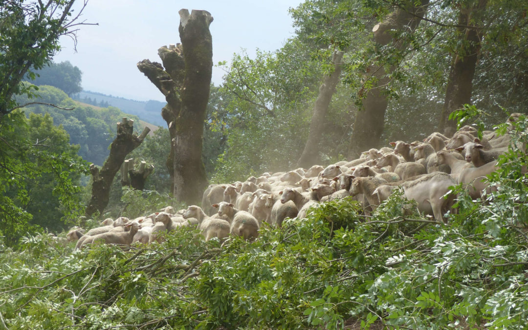 Formation Trognes fourragères – Arbre et Paysage Tarnais – 10 septembre 2020